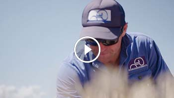 Ian Gourley, Dryland Cotton Grower, Narrabri
