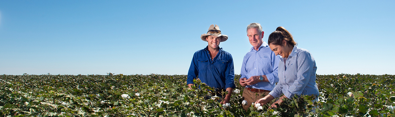 Cotton Sector Rabobank Australia