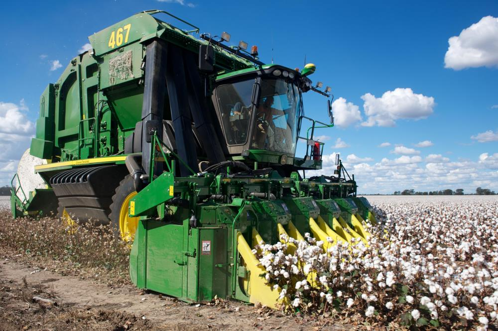 Moree, cotton prices 2019