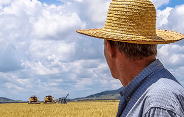 farmer looking at harvest