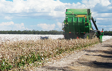 Addressing a key issue facing cotton growers in both Australia and the US