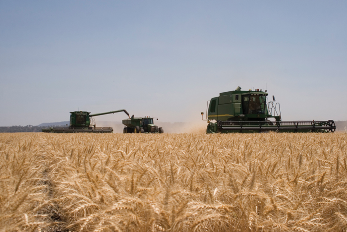 Australian grain farmers to gain from US uncertainty