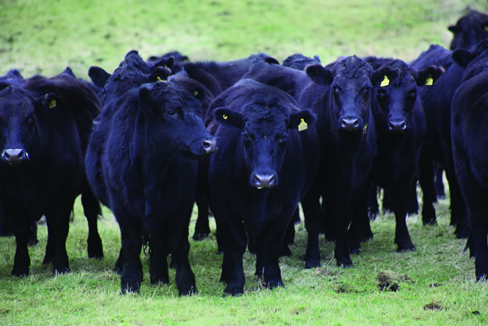 who controls the beef trade