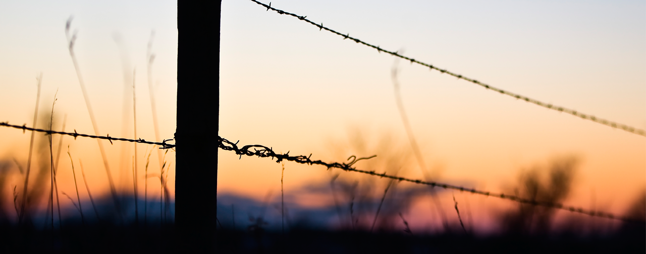 Barbed Wire Fence in the sunset