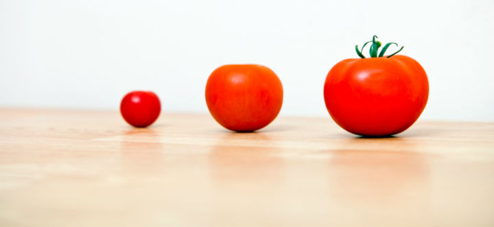 Tomatoes growing in size to demonstrate portfolio growth